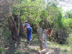 The Solid Wall of Bush is Removed from the Perimeter Fencing